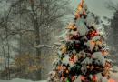 Конкурс «Укрась живую елку!»