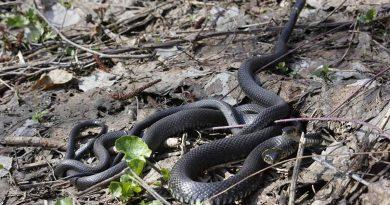 Начался сезон активизации змей