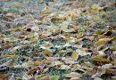 Синоптики предупредили тамбовчан о заморозках и мокром снеге на этой неделе