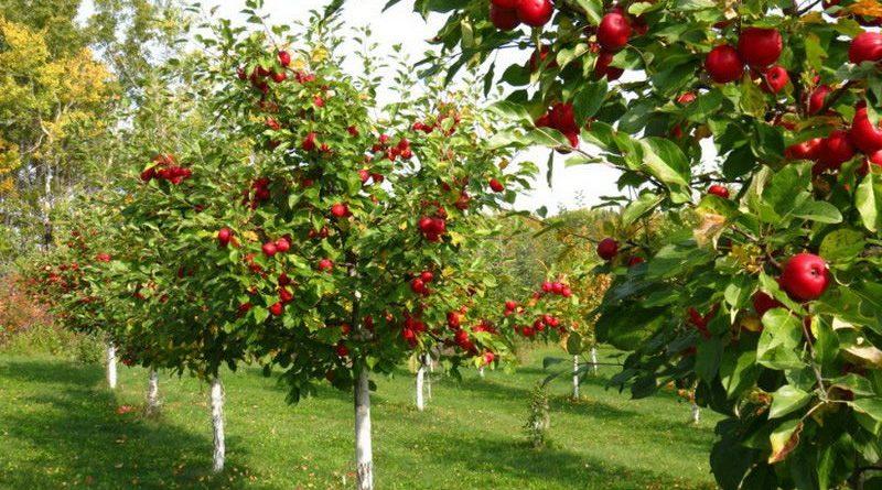 Тамбовские специалисты обсудили вопросы развития интенсивного садоводства в области